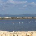 サルディーニャ島・カリアリ観光 野生のフラミンゴが素敵!